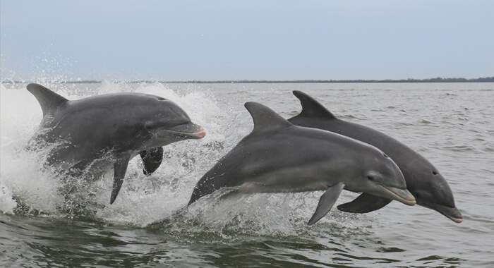 Dolphin Watch Tours Myrtle Beach