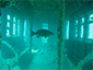 BP-25 & NYC Subway Cars - Myrtle Beach Scuba Diving Site